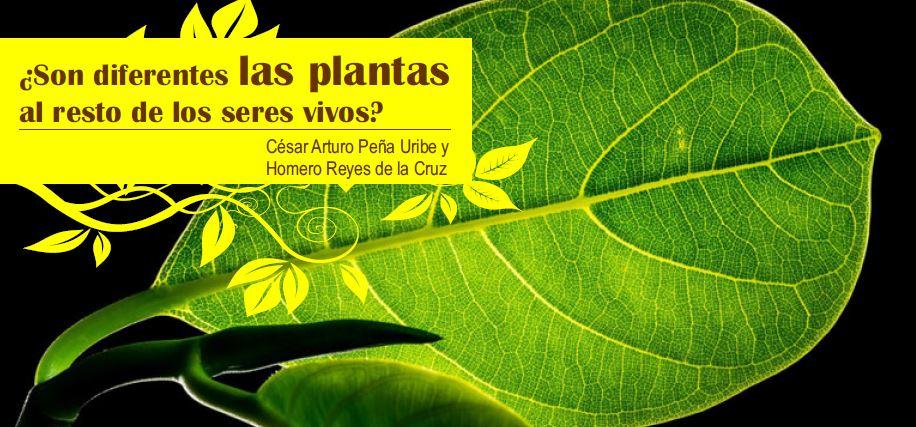 Son diferentes las plantas al resto de los seres vivos for Como se planta la lavanda