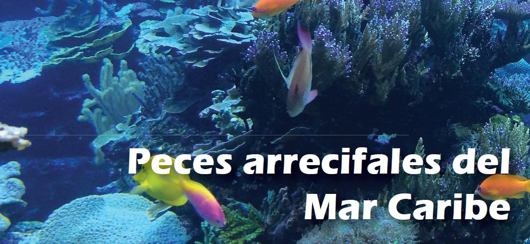 Peces arrecifales del mar caribe for Tipos de jaulas para peces