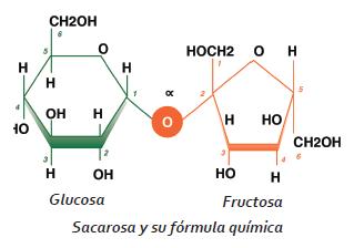 como se obtiene la fructosa