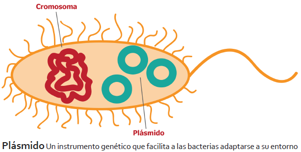 Plásmidos Bacterianos