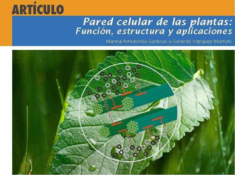 Pared Celular De Las Plantas Función Estructura Y Aplicaciones